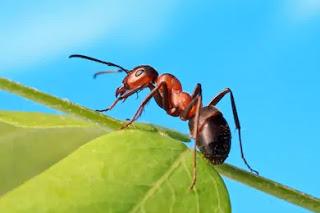 ant dream meaning, seeing ant dream meaning, Seeing ant in dreams, seeing red ants in dream, spiritual meaning of ants in house, dream of killing ants meaning, dream about ants biblical meaning, dream of ants marching, dream number for ants, seeing red ants in dream, biblical meaning of red ants in dreams, Seeing ant in dreams, sees an ant in his dream