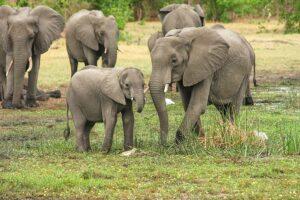 सपने में हाथी का बच्चा देखना ( Sapne Mein Hathi Ka Bachcha Dekhna )